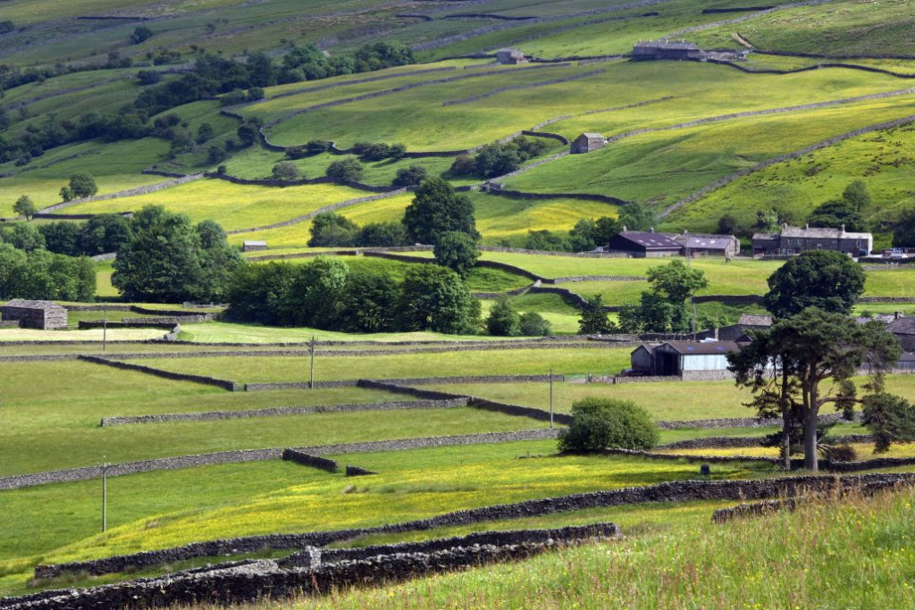 traditional dry stone walls in the farmland of the yorkshire dales in northeast england